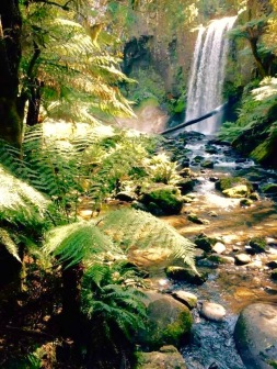Rivers run through pristine rainforest, waterfalls framed by ancient mountain ash spill out to meet the South-West coast of Victoria and the wild Southern Ocean. This is one of our favourite places to explore.