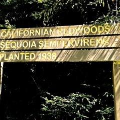 Reedwoods1 (1)
