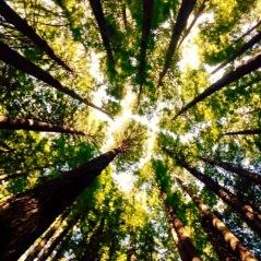 rewoods2 (1)